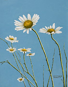 Daisies In The Wind Print by Mary Ann King