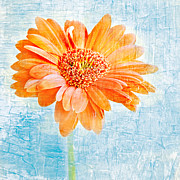 Texture Flower Prints - Daisy Print by HD Connelly