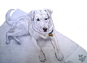 Pooch Drawings Posters - Daisy Poster by Nancy Rucker