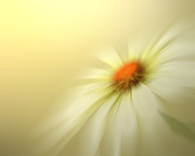Marguerite Flowers Posters - Daisy Poster by Sharon Lisa Clarke