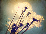 Summer Breeze Posters - Dandelions For You Poster by Amy Tyler