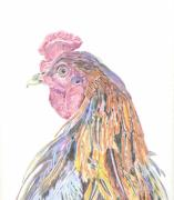 Rooster Drawings Acrylic Prints - Dandy Acrylic Print by Annalis Doyle