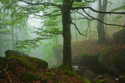 Green Foliage Prints - Dark Forest Print by Evgeni Dinev