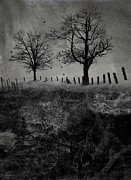 Tree Roots Digital Art - Dark Roost by Ron Jones