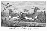 J.g Prints - Deer, 1796 Print by Granger