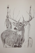 Cornfield Drawings Prints - Deer in Cornfield Print by Amber Zerba