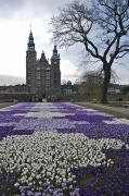 Denmark, Copenhagen Crocus Bloom Print by Keenpress
