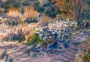 Desert Painting Originals - Desert Flora by Donald Maier