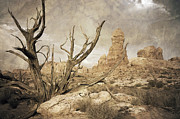 Southwestern Photograph Posters - Desert Tree Poster by Mike Irwin