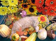 Di Milo - Flower Child - Kitty Cat Kitten Sleeping In Fall Autumn Harvest Print by Chantal PhotoPix