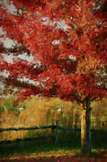Orange Art Posters - Digital painting maple tree in full color Poster by Sandra Cunningham