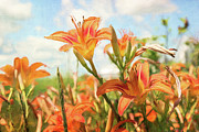 Garden Art Prints - Digital painting of orange daylilies Print by Sandra Cunningham