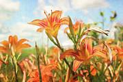Digital Painting Of Orange Daylilies Print by Sandra Cunningham