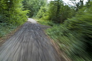 Dirt Roads Photos - Dirt path and surrounding bush seen from a cyclists point of view by Sami Sarkis