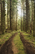 Dirt Road Posters - Dirt Road Through Forest Poster by Ned Frisk