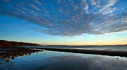 Tidepool Prints - Discovery Park Reflections Print by Mike Reid