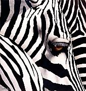 Africa Paintings - Do zebras dream in color... by Will Bullas