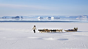 Dog Walking Prints - Dog Sled, Qaanaaq, Greenland Print by Louise Murray