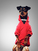 Attitude Photos - Dog Wearing Hooded Sweatshirt by 24frames