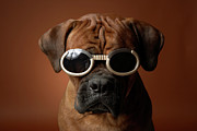 Looking Down Framed Prints - Dog Wearing Sunglasses Framed Print by Chris Amaral