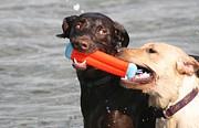 Dogs At The Beach Print by Valia Bradshaw
