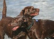 Dogs On The Beach Print by Valia Bradshaw