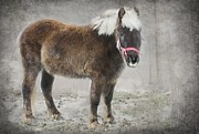 Photography Originals - Donkey by Sophie Vigneault