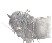 Percheron Drawings Posters - Draft Horse Poster by Cathy Lester