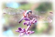Insects Pastels Posters - Dragonfly Poster by Janet Pugh
