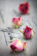 Single Rose Stem Photos - Dried roses by Kati Molin