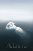 Polar Bear Framed Prints - Drifted Framed Print by Joel Payne