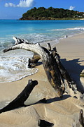 Beach Photography Originals - Driftwood on fFryes Beach by Sophie Vigneault