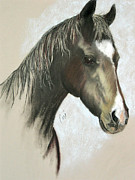Black Horse Pastels Prints - Drum Print by Cori Solomon