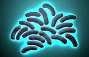 Bacterium Digital Art - E-coli Cells by MedicalRF.com