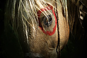 Paint Horse Posters - Eagle Eye Poster by Lyndsey Warren
