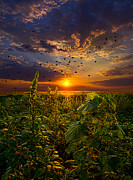 Geographic Prints - Early Bird Special Print by Phil Koch