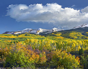 Snow-covered Landscape Framed Prints - East Beckwith Mountain Flanked By Fall Framed Print by Tim Fitzharris
