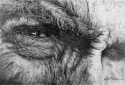Outlaw Drawings - Eastwood by Roy Kaelin