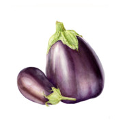 Botanical Painting Originals - Eggplants by Fran Henig