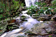 Rushing Water Prints - Elakala Falls on Shays Run Print by Thomas R Fletcher