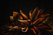 Floral Art Photos - Elegance by Bonnie Bruno