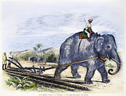 Sugar Plantation Framed Prints - Elephant Plowing, 1847 Framed Print by Granger
