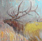Elk Paintings - Elk by Donald Maier
