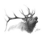 Wildlife Drawings Drawings Prints - Elk Print by Larry Dez Dismang