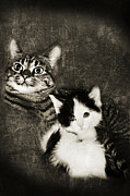 Felines Tapestries Textiles - Emmy And Pepper The Early Years by Andee Photography