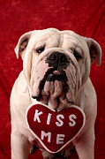 Hearts Prints - English Bulldog Print by Garry Gay