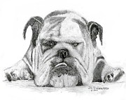 Jim Hubbard Prints - English Bulldog Print by Jim Hubbard