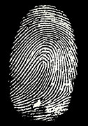 Forensics Photos - Enlarged Fingerprint by Sheila Terry