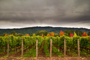 Napa Valley Photos - Estate by Ryan Hartson-Weddle