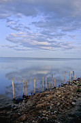 Southern France Metal Prints - Etang de Vacaress. Camargue. Metal Print by Bernard Jaubert